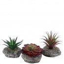 Succulent on stone, 3 motifs, H10-15cm, green